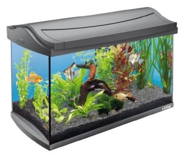 Tetra 151543 Aquaart Aquarium Komplett Set 60 L Modernes Design In Verbindung Mit