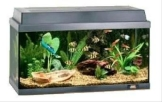 Juwel Korall 60 Aquarien-Set 54 l.sw 20n - 1